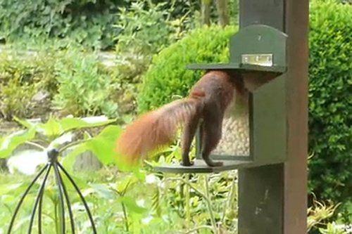 Bauanleitung: Eichhörnchen Futterkasten Westfalia Versand