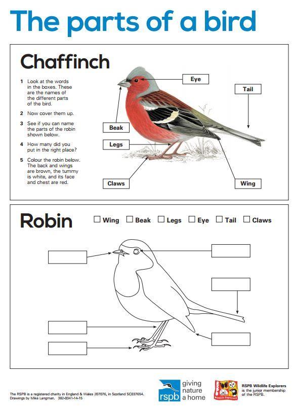 bird coloring pages rspb shop - photo#3