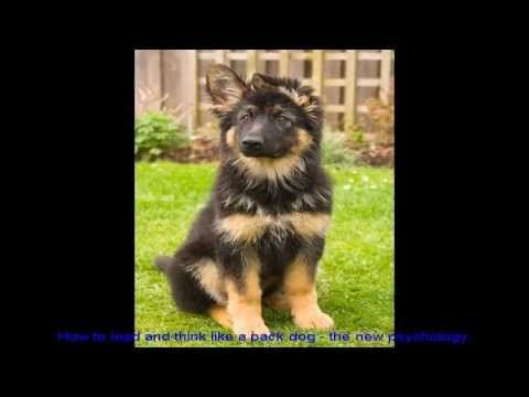 German Shepherd Dog Training Tips Puppy Video - http://www.7tv.net/german-shepherd-dog-training-tips-puppy-video/
