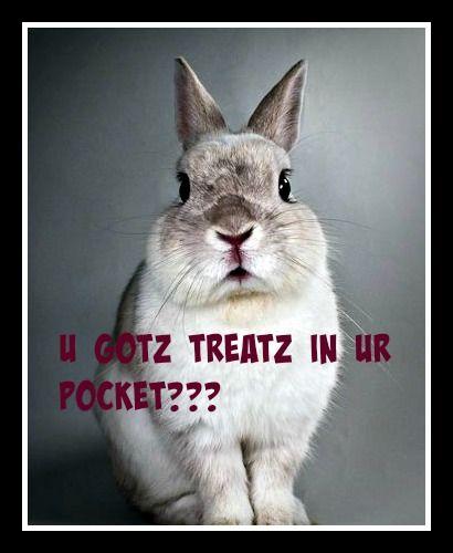 37f3c4172b044cc380ff3858450e945e pin by barb love on bunny memes pinterest ps