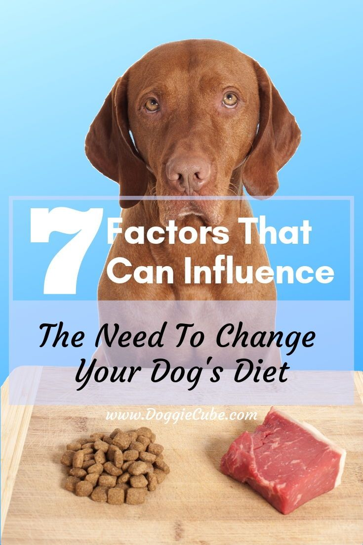 7 factors that can influence the need to change your dogs