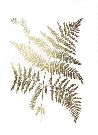 Shop for framed gold foil ferns i metallic foil by vision studio
