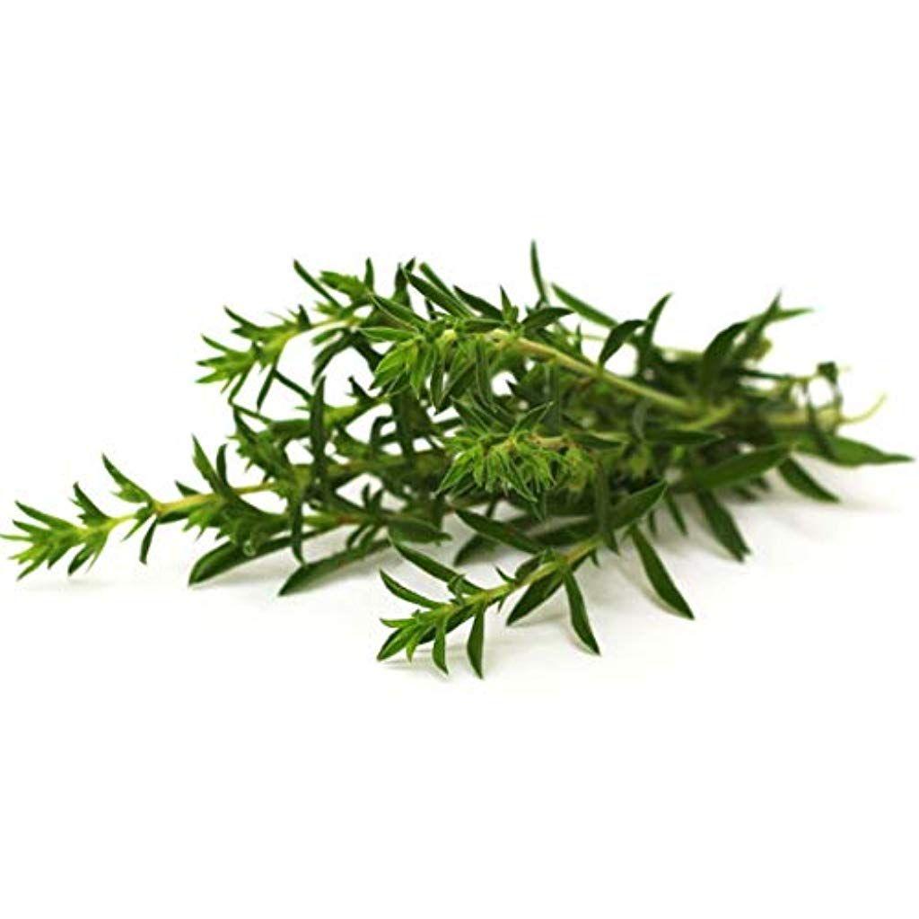 300 Graines de Coriandre plantes aromatique jardins fleurs legumes méthode BIO