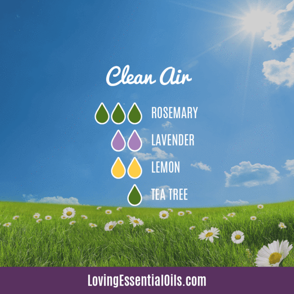 Top 12 Antibacterial Essential Oils Antibacterial