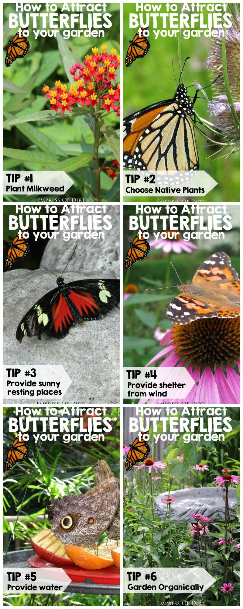 7 Important Tips For Attracting Butterflies To Your Garden Plus Ways To  Help Conserve The Monarch