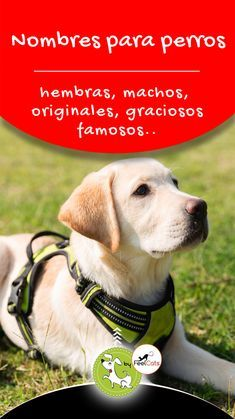 Photo of 🐶 Names of dogs; males, originals, funny …