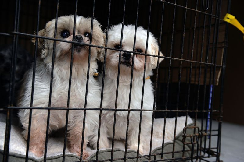 California Will Become First State To Require Pet Stores To Sell Only Rescue Animals With Images Animal Rescue Pet Store Pets