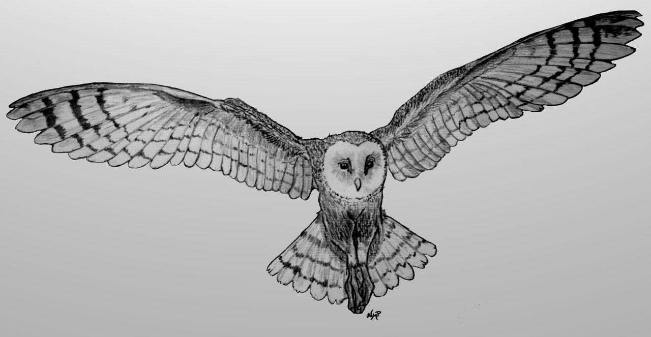 Barn Owl flying by skoppio.deviantart.com on @deviantART ...