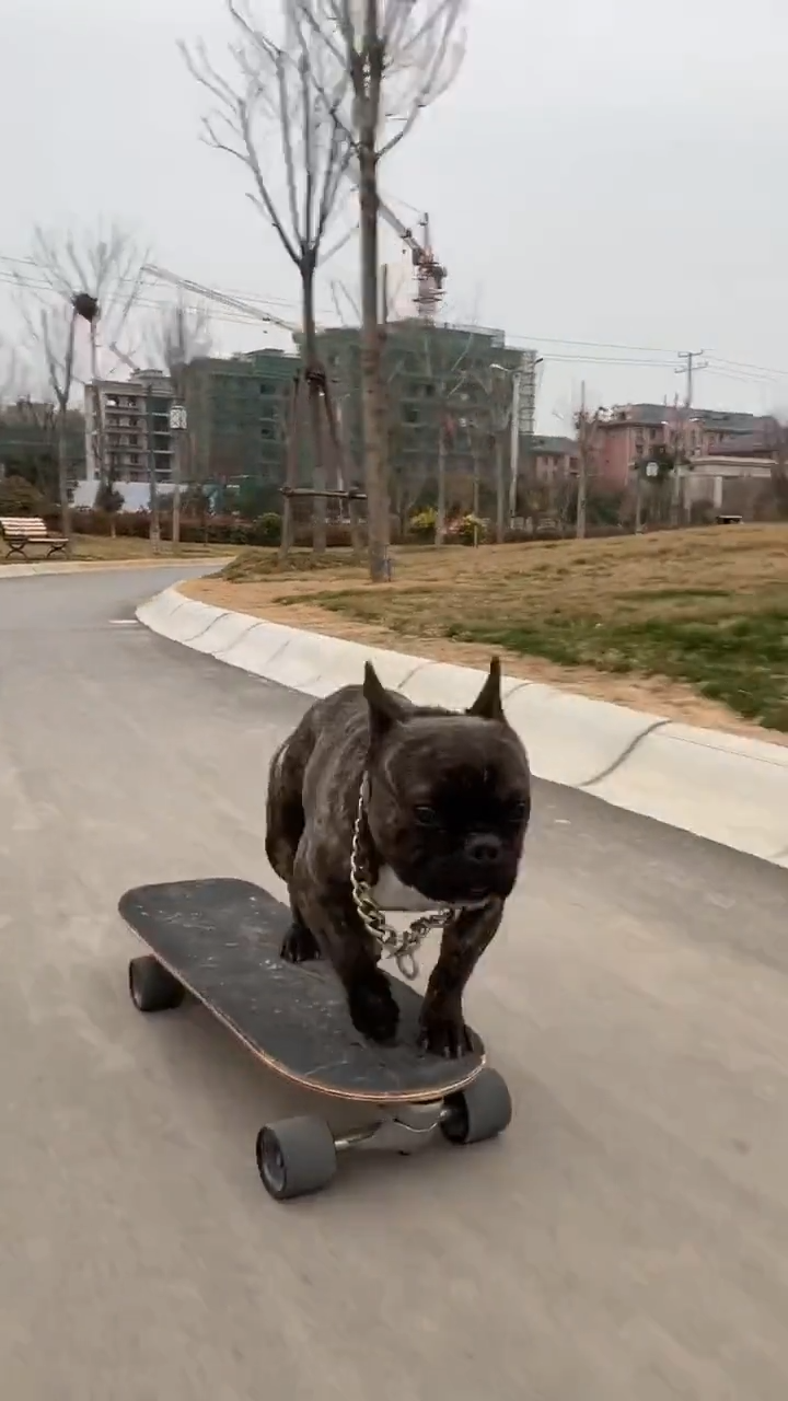 Photo of This dog is an ace skateboarder🛹🛹