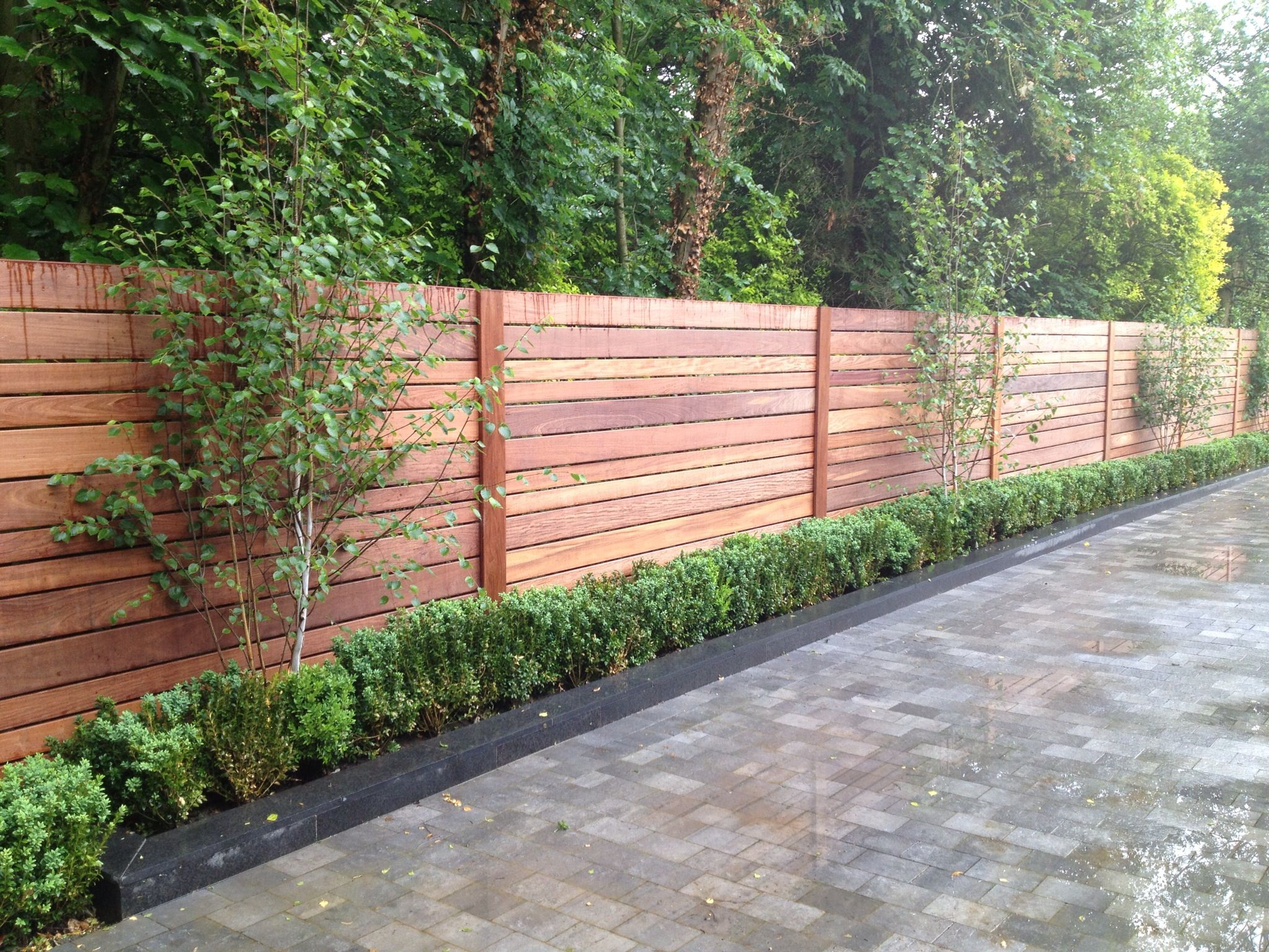 Ipe fence box hedging birch garden pinterest fence for Garden hedge designs