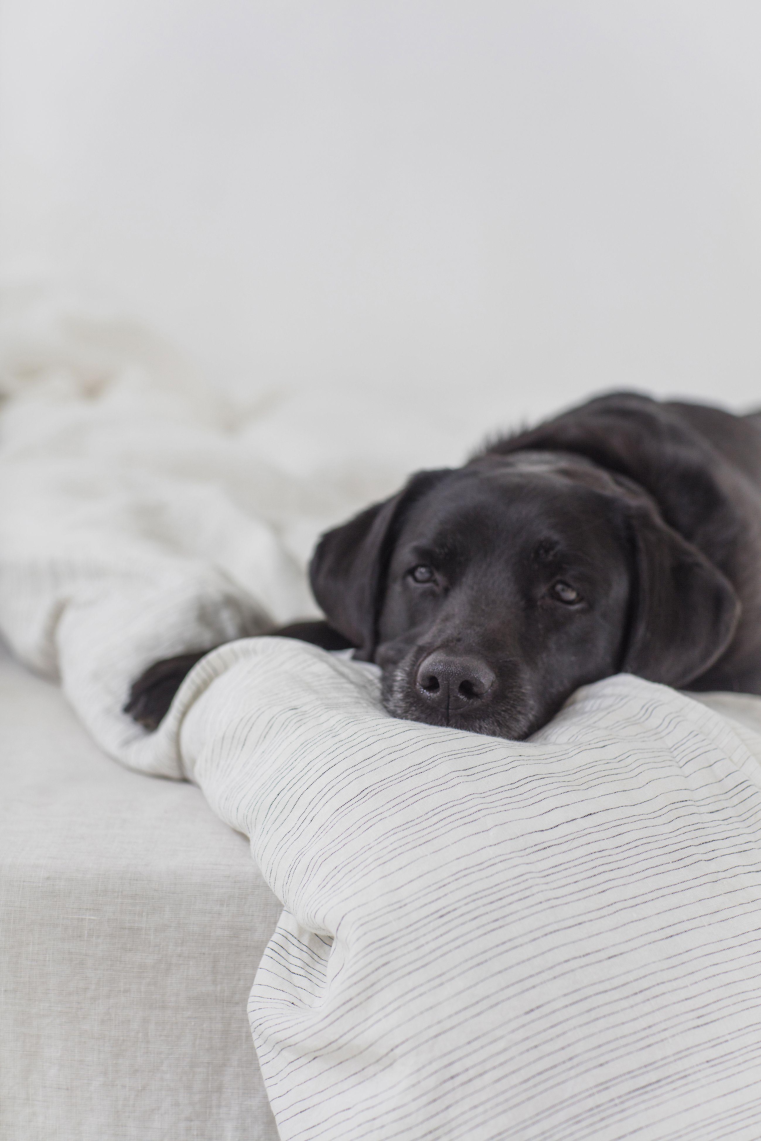 Pale Grey Stripe Linen Pillowcase Lario Collection NEW