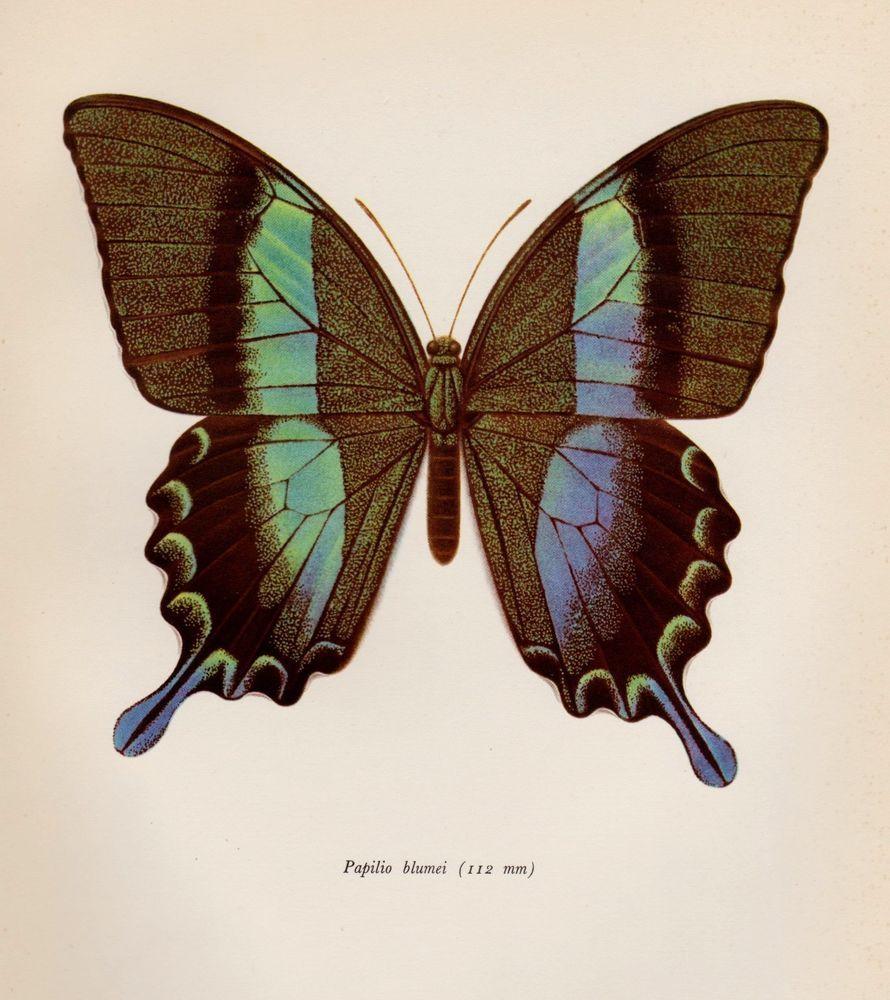 Vintage BUTTERFLY Print Beautiful Butterfly Wall Art GREEN ...