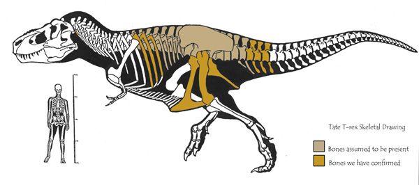 Lee Rex Diagram Camp 2015 Pinterest Diagram Tyrannosaurus And