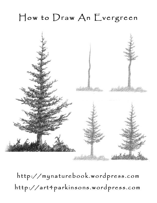 how to draw and paint evergreen trees art journal drawing scenery tree drawing simple tree. Black Bedroom Furniture Sets. Home Design Ideas