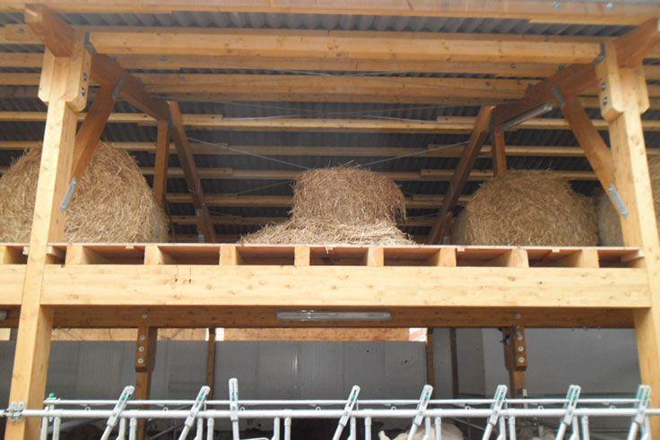 Außergewöhnlich Bullenmaststall aus Holz bauen #HaasLandwirtschaftsbau #XM_07