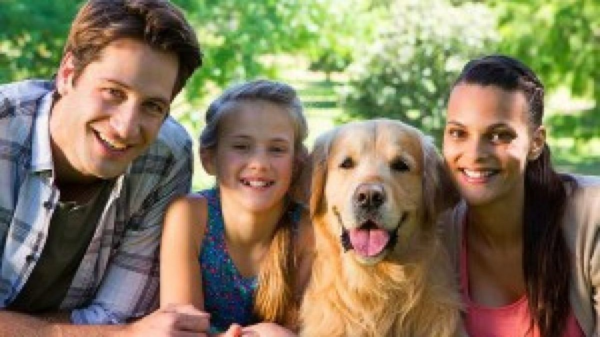 Pet Parents In 2020 Pet Parent Pet Sitters Pet Sitting Business