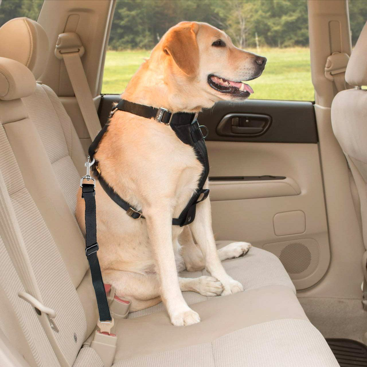 Sikantispets Great For Securing Your Dog In Your Car With A Dog