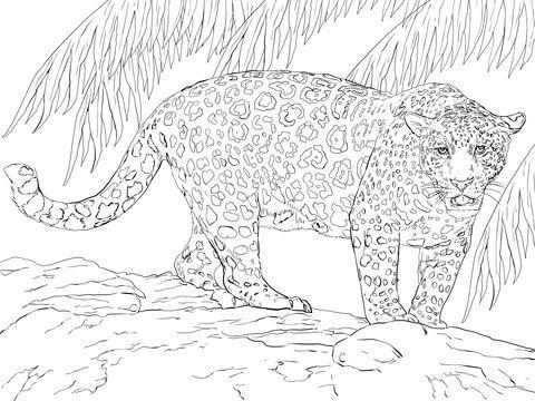 Groer Jaguar Ausmalbild  Zum Ausmalen  Pinterest  Ausmalbilder