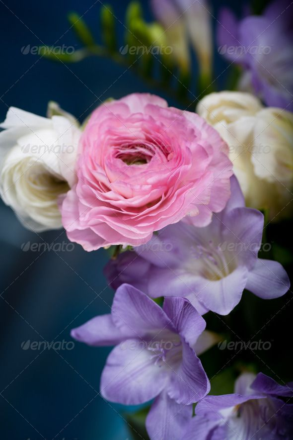 bunch of spring flowers ...  Ranunculus, arrangement, beautiful, blossom, bouquet, bunch, color, flowers, freesias, freshness, gift, hyacinths, nature, objects, spring, table, tulips