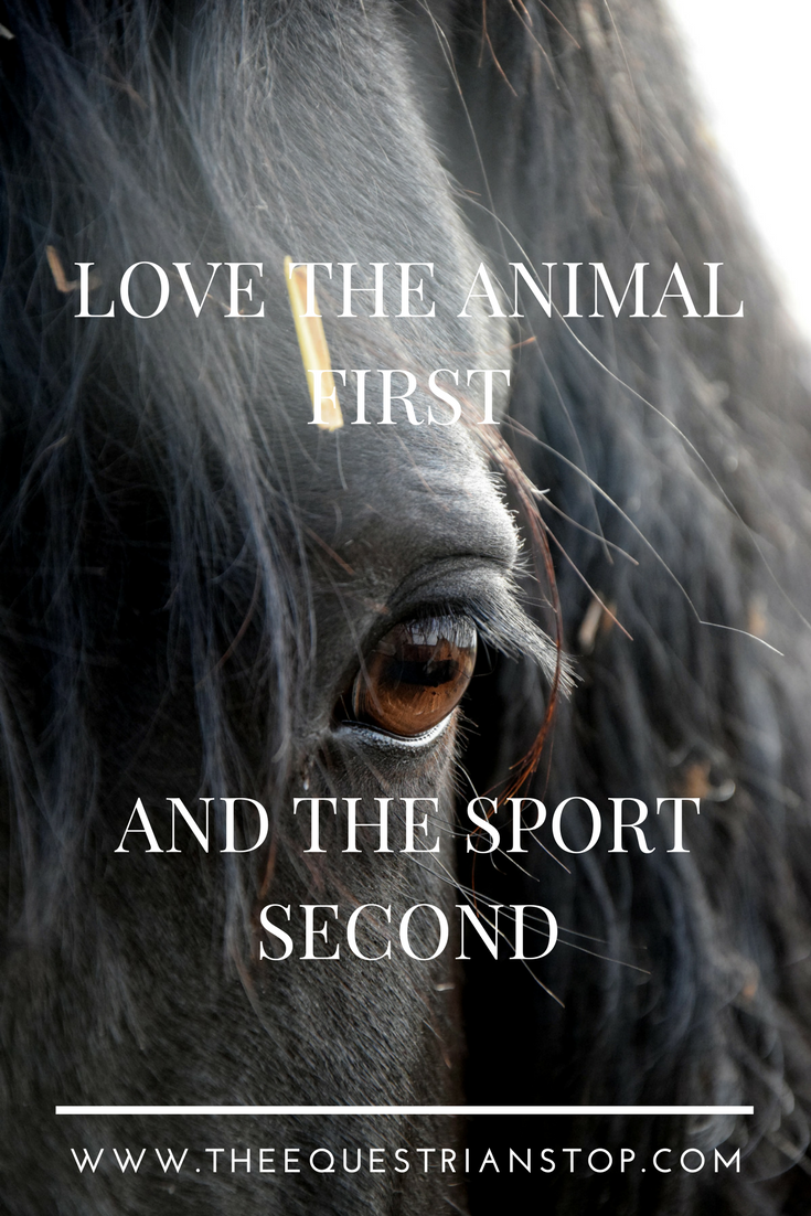 Love the animal first .... and the sport second | Horse Love #horse #equestrian #cowgirl