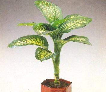 Plantas de interior plantas de sombra o de interior for Plantas ornamentales de interior