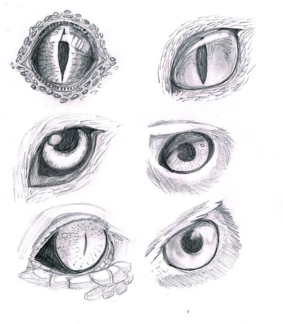 animal eye drawings: | Drawings