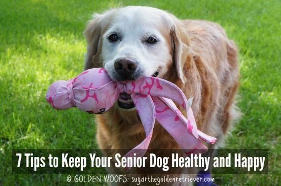 7 Tips to Keep Your Senior Dog Healthy and Happy  Golden Woofs  Pets