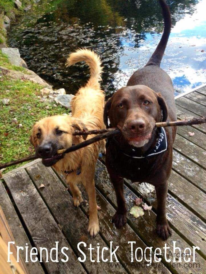 Stick Toss. Friends Stick Together. #dogs #sticktoss #andreaarden #andreaardendogtraining