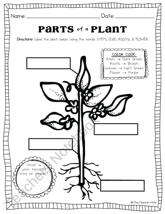 parts of a plant worksheet play learn science classroom science education kindergarten. Black Bedroom Furniture Sets. Home Design Ideas