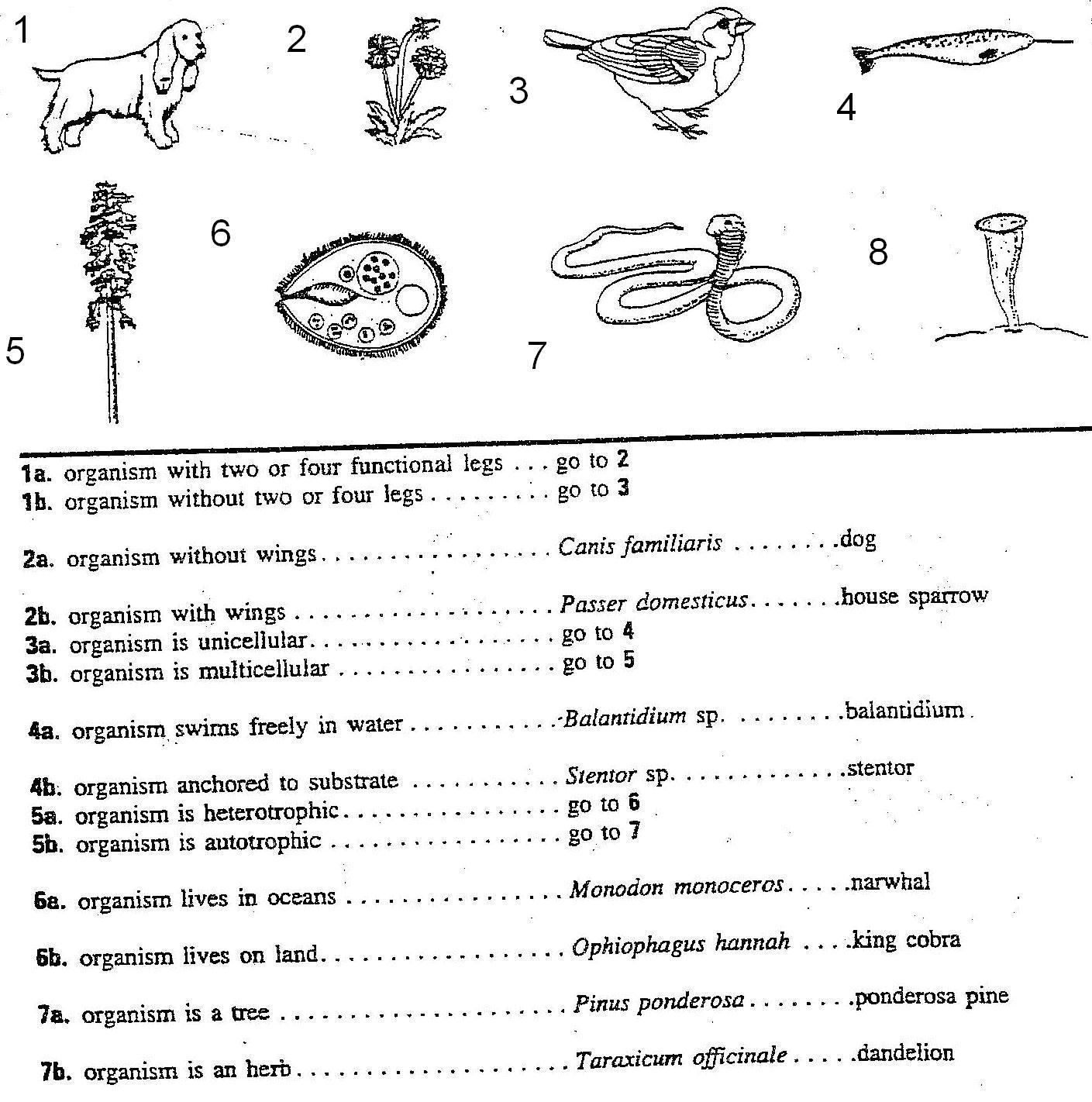 Dichotomouskey1 Ssjeiq Jpg 1409 1422 Dichotomous Key