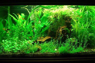Overgrown Fish Tank Small Fish Tanks Fish Tank Underwater World