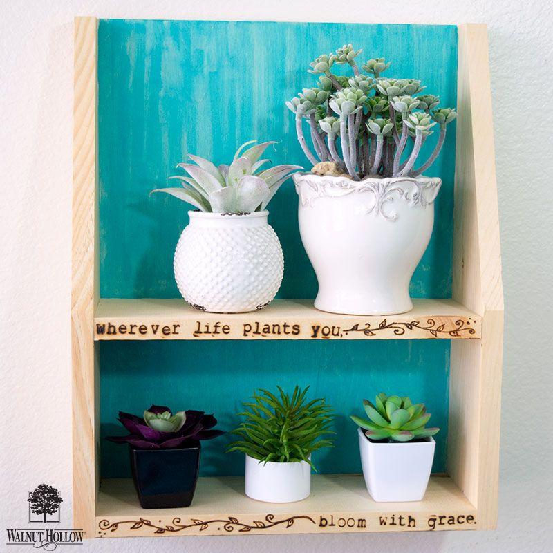 Nursery Indoor Plants Near Me: Succulent Plant Display Shelf