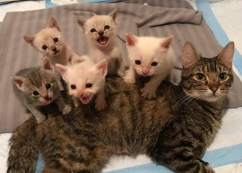 Mama Cat Found In Shed With Her Kittens Wouldn T Rest Until Her