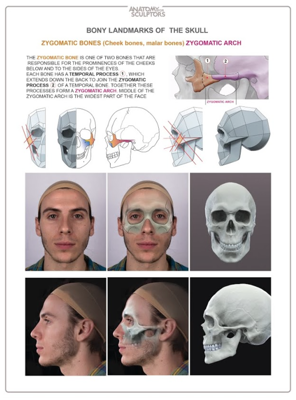 Anatomy Next store - ANATOMY OF FACIAL EXPRESSION (DELIVERY JANUARY ...