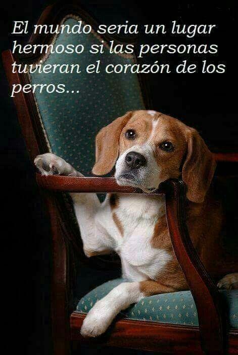 Pin De Elena En Ayudalos Protegelos Amalos Y Conoceras La Verdadera Lealtad Perros Frases Perros Perro Beagle