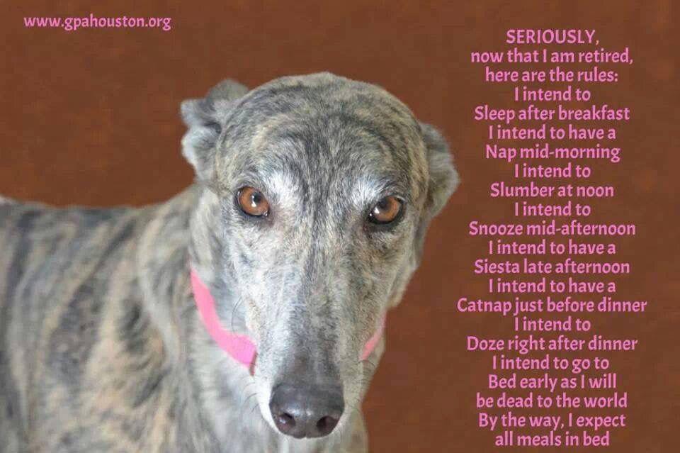 This Is So True X Please Consider Adopting A Greyhound They Make Wonderful Pets Www Retiredgreyhounds Co Uk Dog Expressions Greyhound Greyhound Adoption
