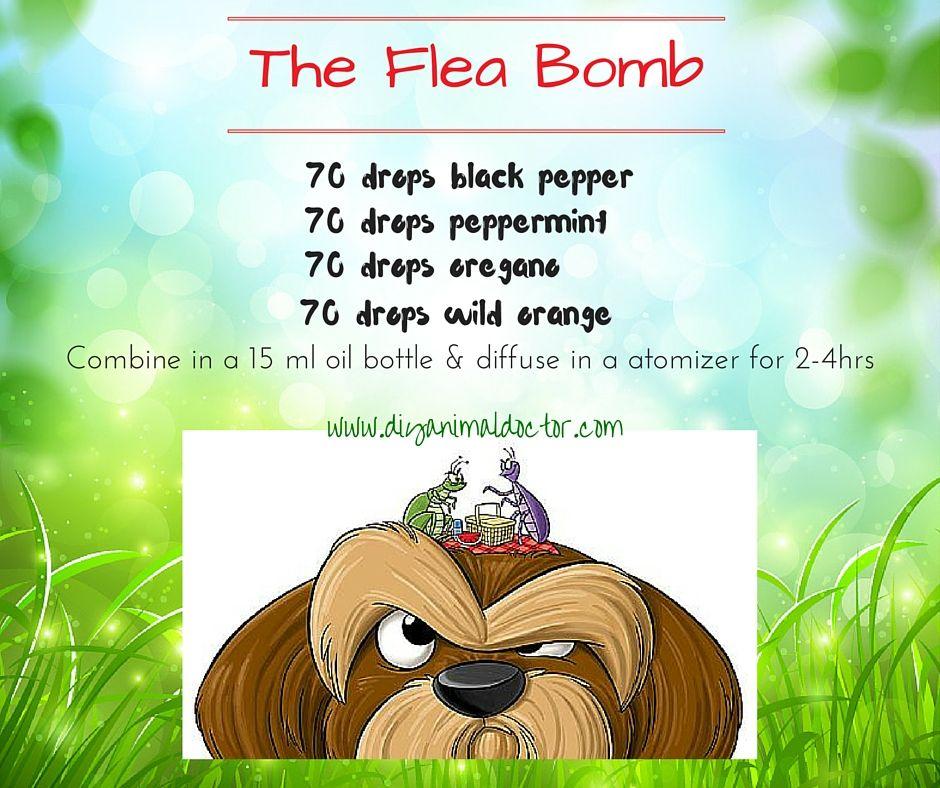 The flea bomb cat tips pinterest dog the natural home flea bomb ccuart Images
