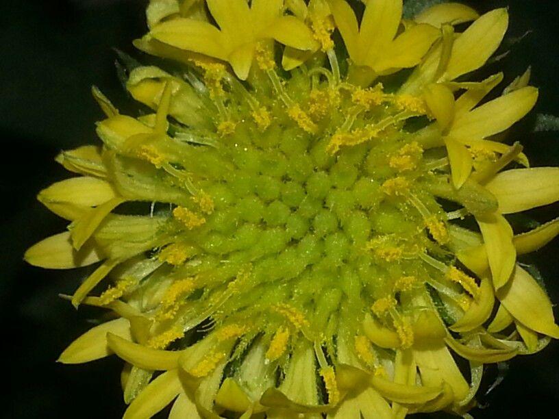 Pollen 4