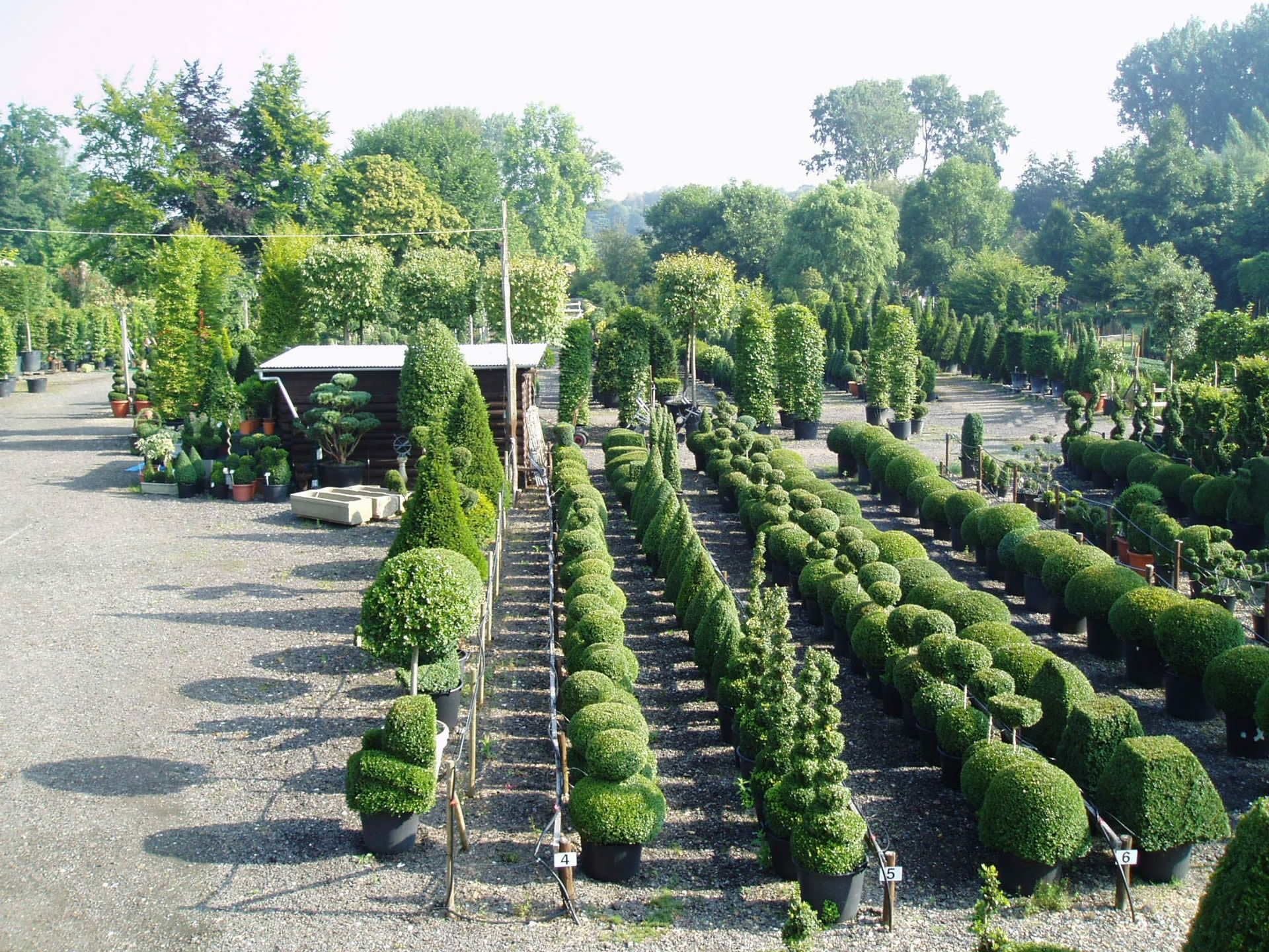 16 Marvellous Topiary Ideas With
