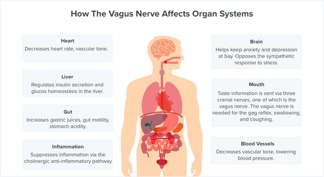 6 Ways to Stimulate Your Vagus Nerve and Relieve Inflammation ...