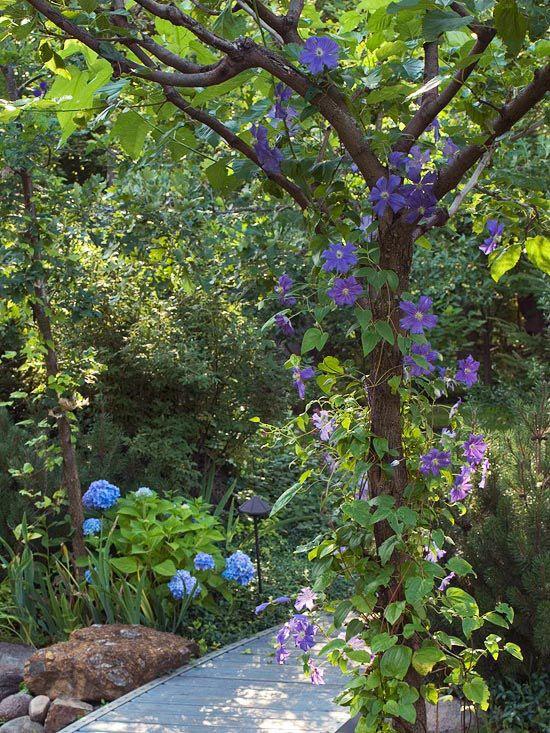 Stunning Shade Garden Design Ideas Shade Garden Garden