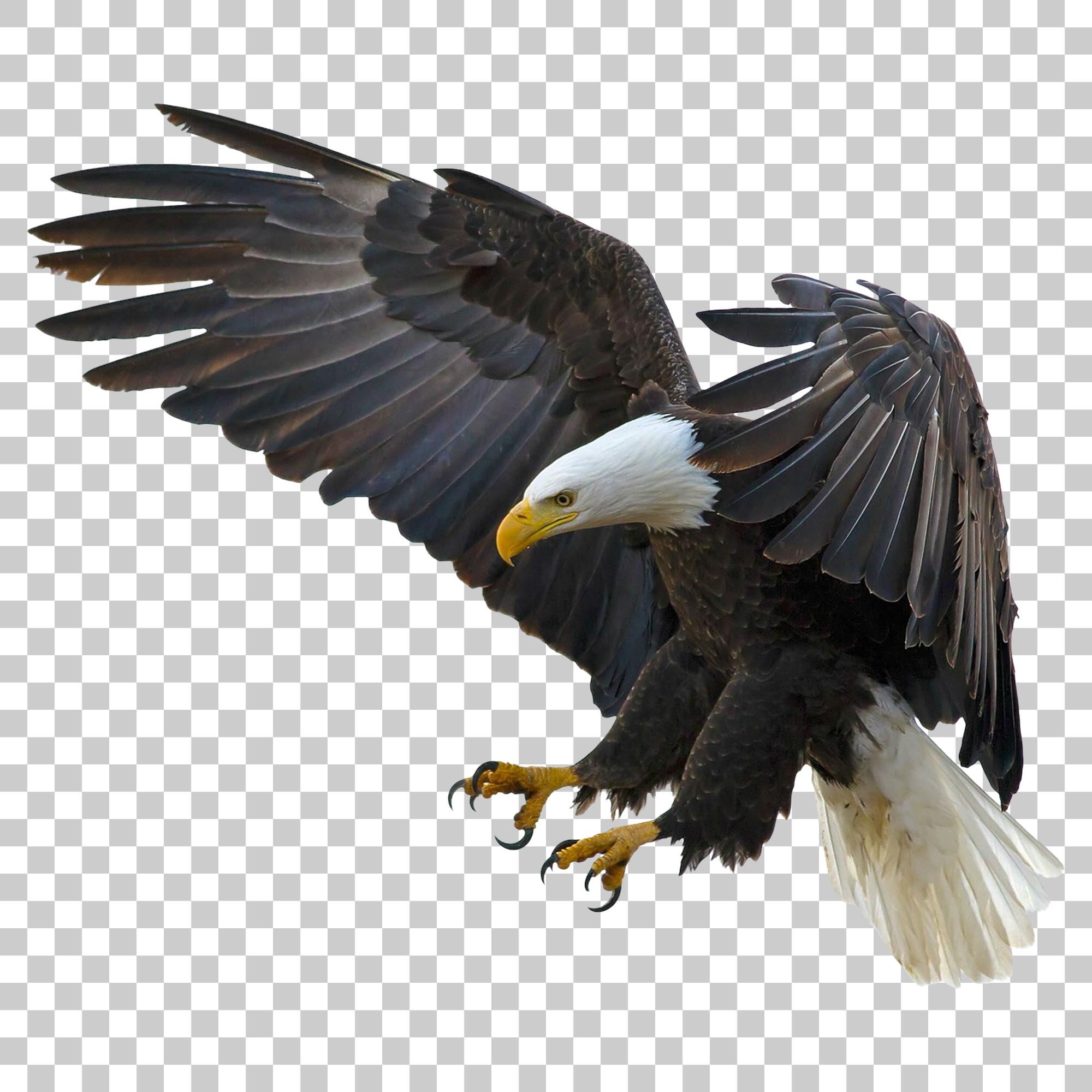 Eagle Hawk Bird Png Image With Transparent Background Blur Image Background Black Background Images Studio Background Images
