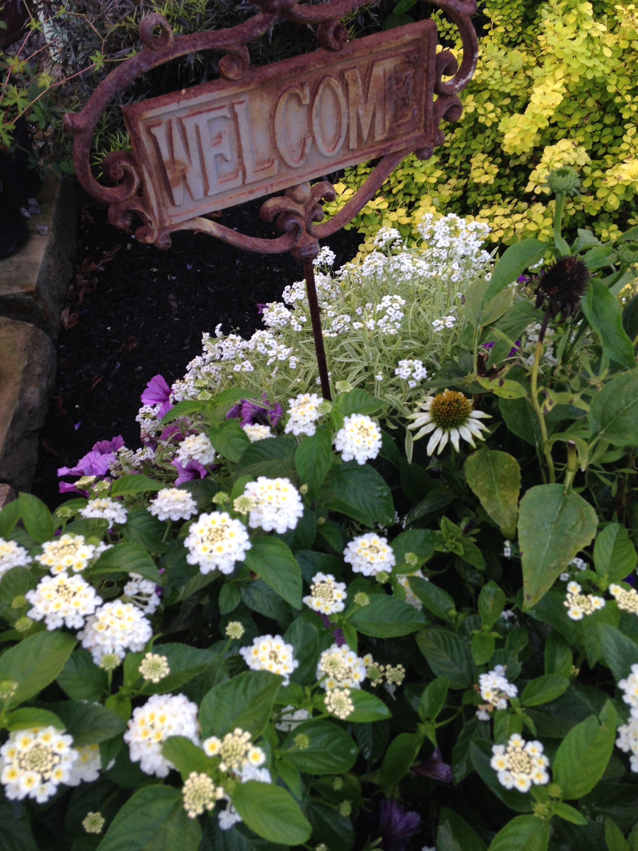 Summer Planter With White Lantanna White Coneflower Purple