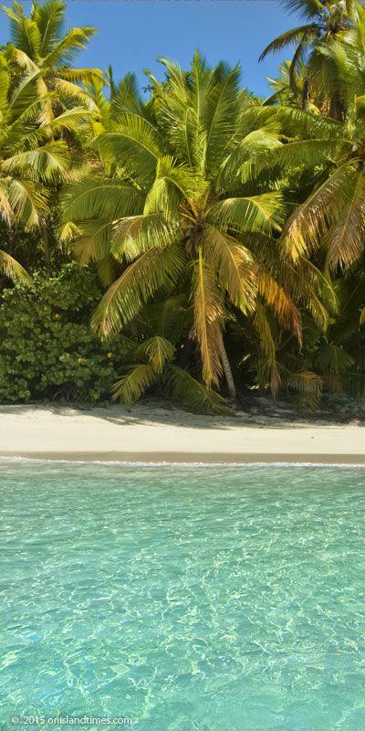 Palms, sand, sea and sun ...Gibney Beach, Saint John, US Virgin Islands.