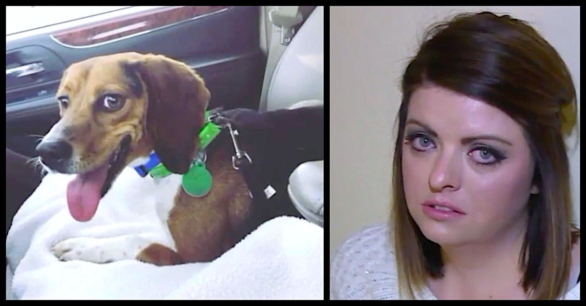 Devastated Mom Learns Rescue Beagle Sacrificed Himself To Save Her