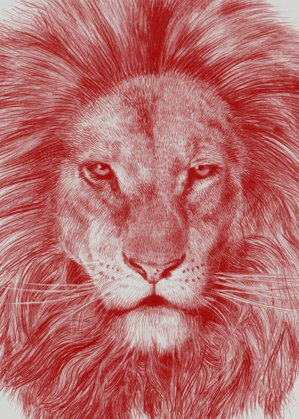 Best Red Leo Animals Poster Print Metal Posters Animal 400 x 300