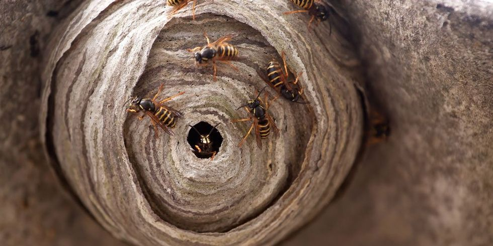 6 ways to keep wasps away from you in 2020 cutter
