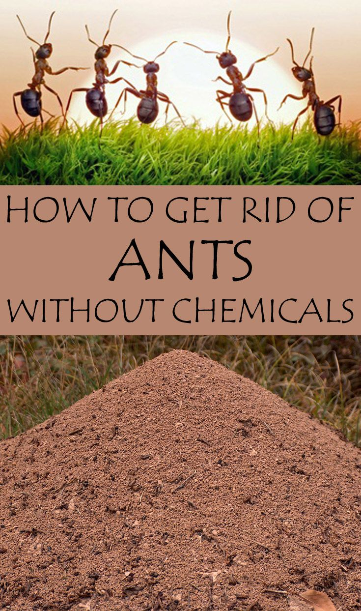 Protect your garden against harmful insects using natural ...