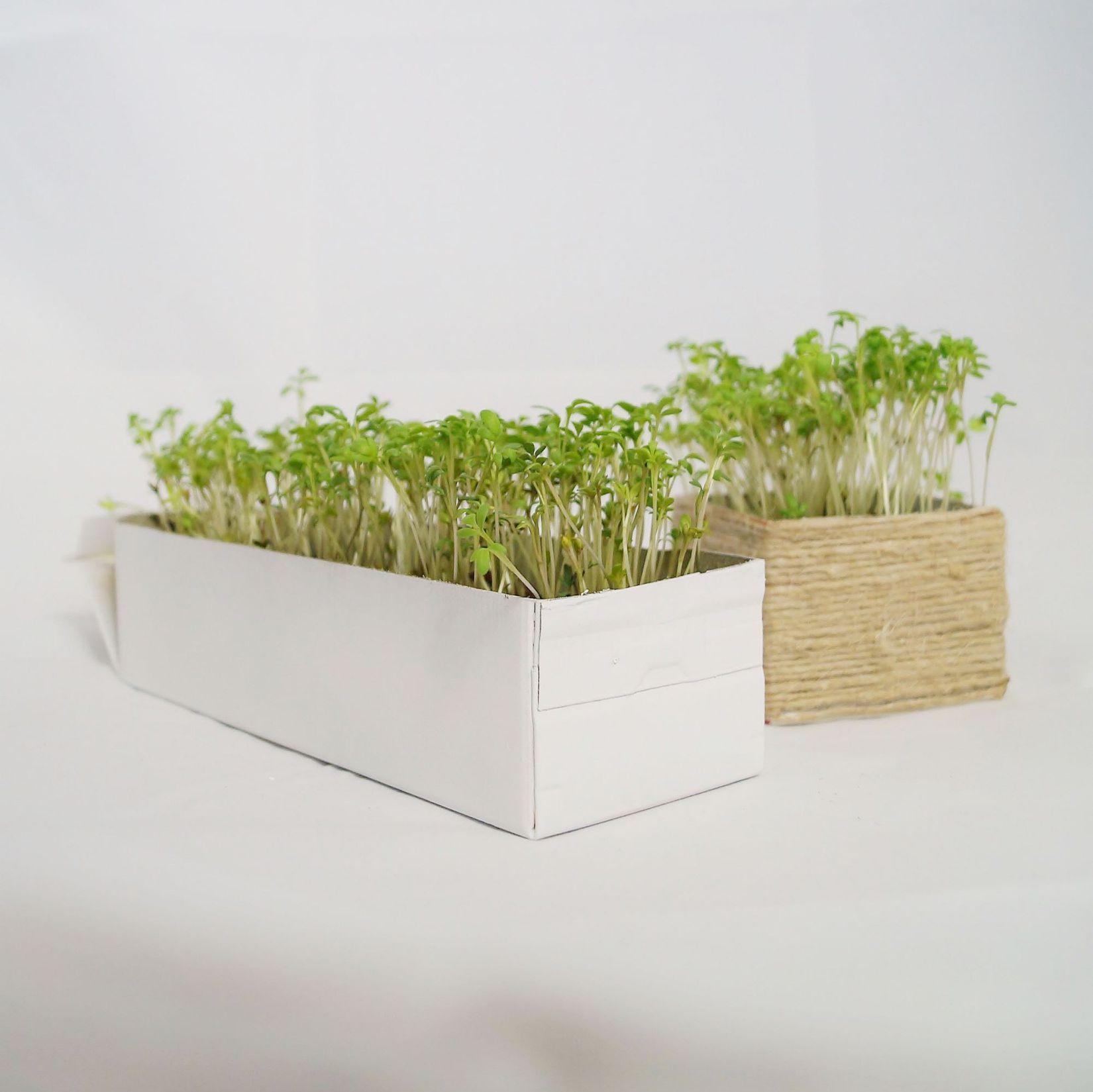 Perfekt Diy Mini Garten Für Die Küche | || Blogger   Outdoor U0026 Garten, Kuchen