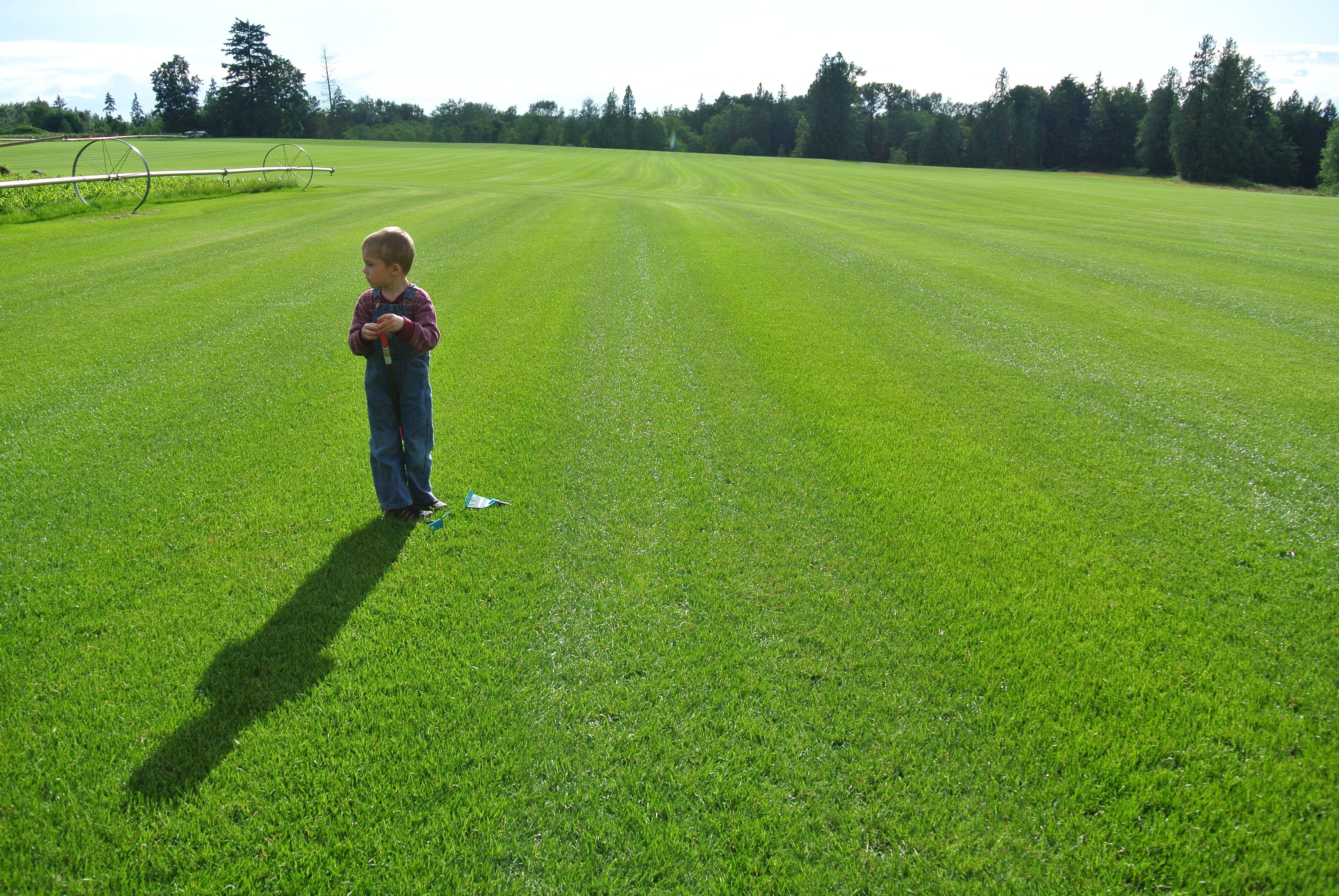 Quality Topsoil Sod Grass For Sale In Bc Grass For Sale